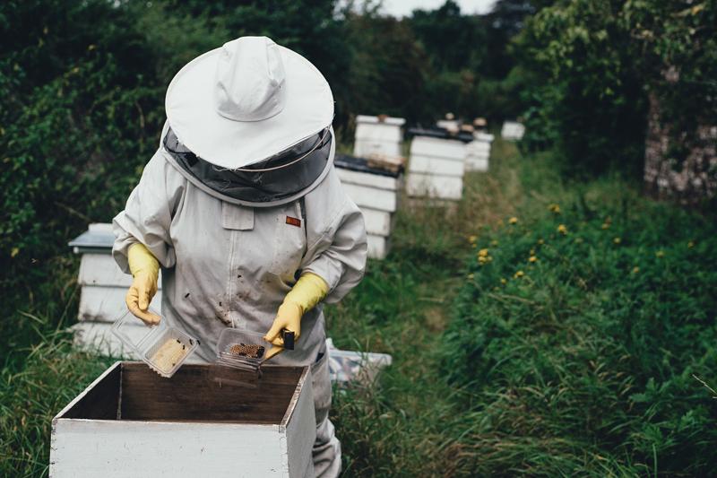 Meldepflicht für Bienenhaltung